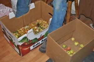 Sean sorting and slicing apples
